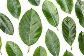 listy stromu jackfruit izolovaných na bílém pozadí. Tropická rostlina zelená listová pružina času nápis