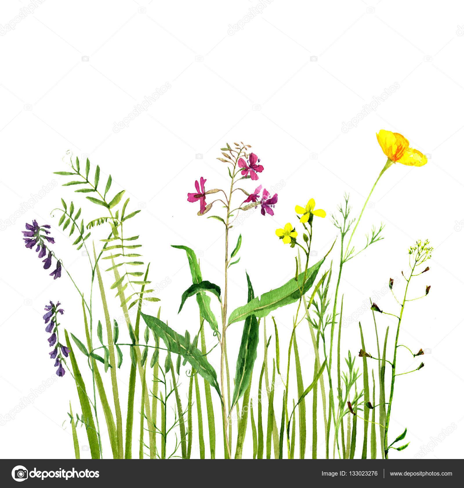 aquarelle dessin fleurs et l herbe verte photographie cat arch angel 133023276. Black Bedroom Furniture Sets. Home Design Ideas