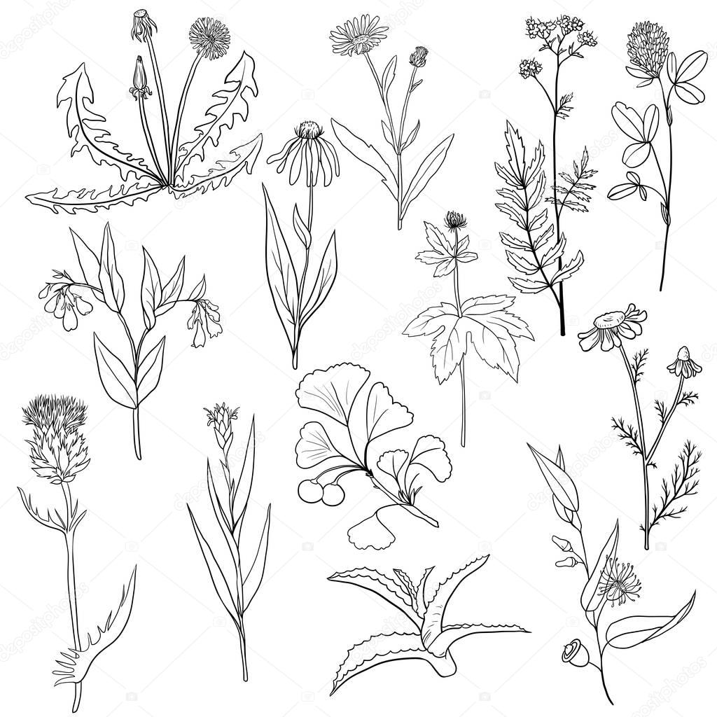 vector set of medical plants