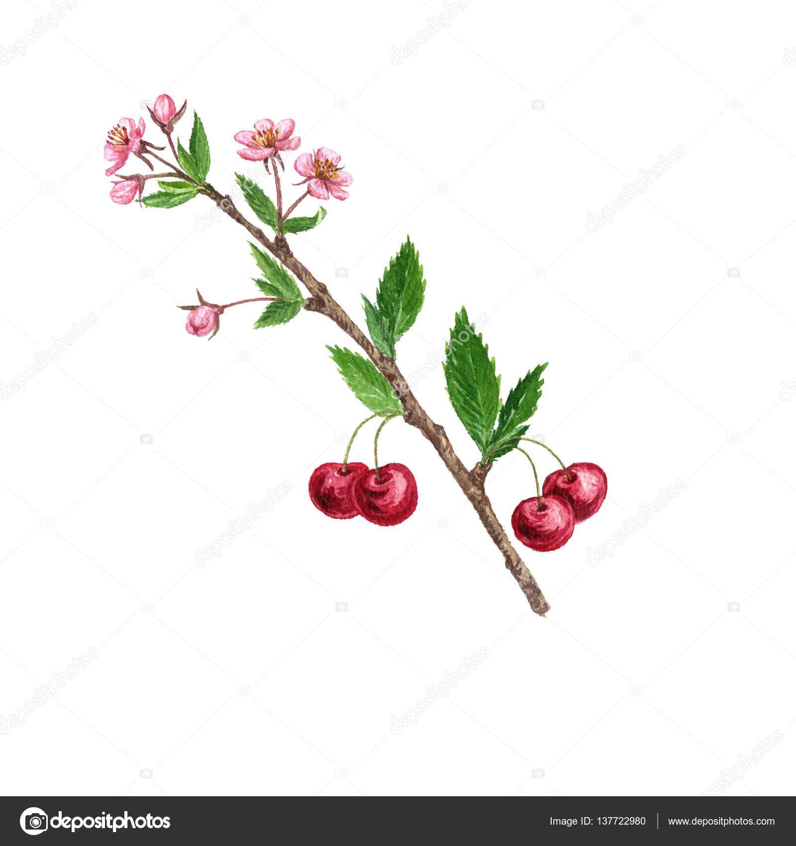 fleur de cerisier tatouage poignet homme