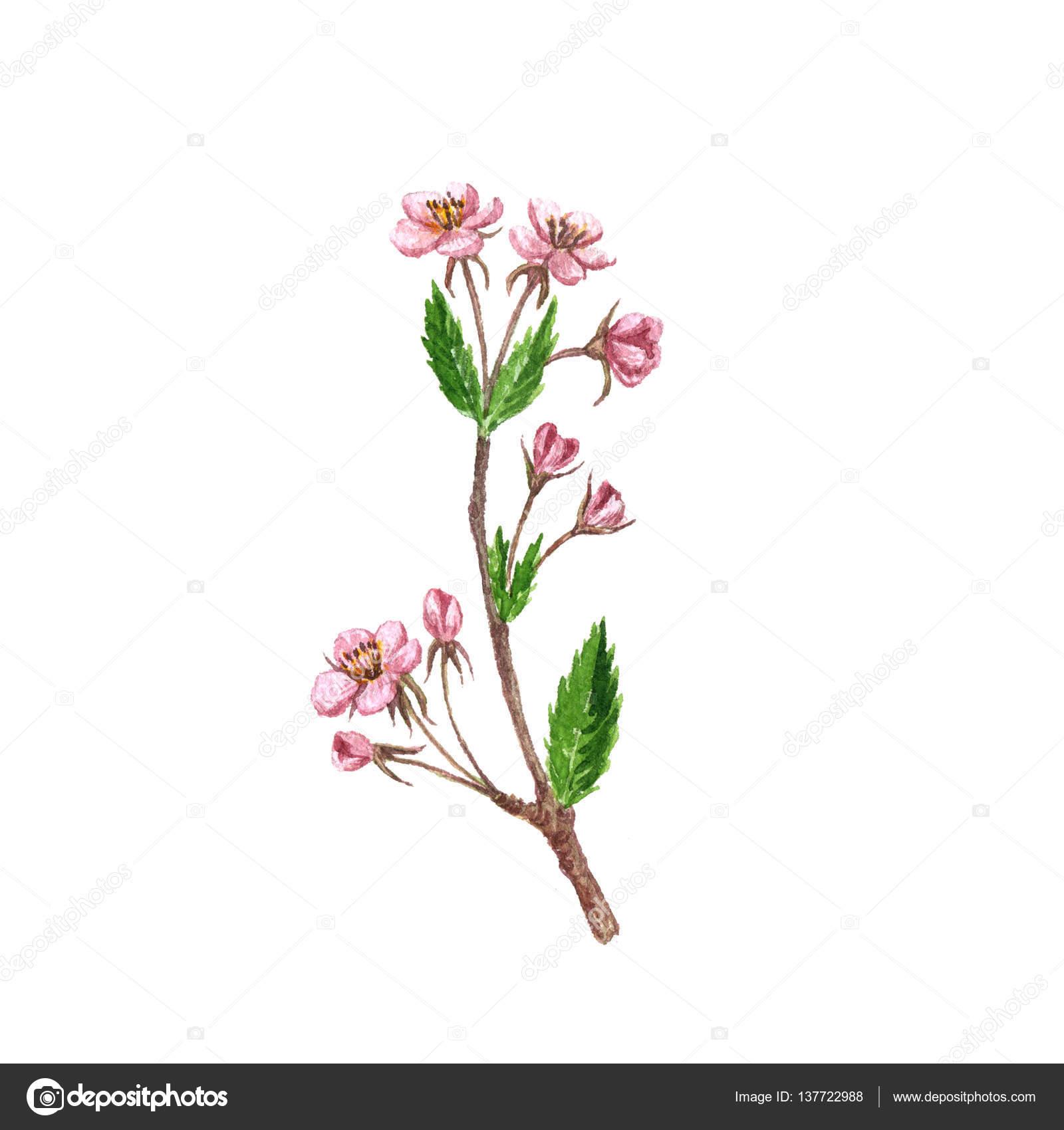 tatouage arbre de cerisier