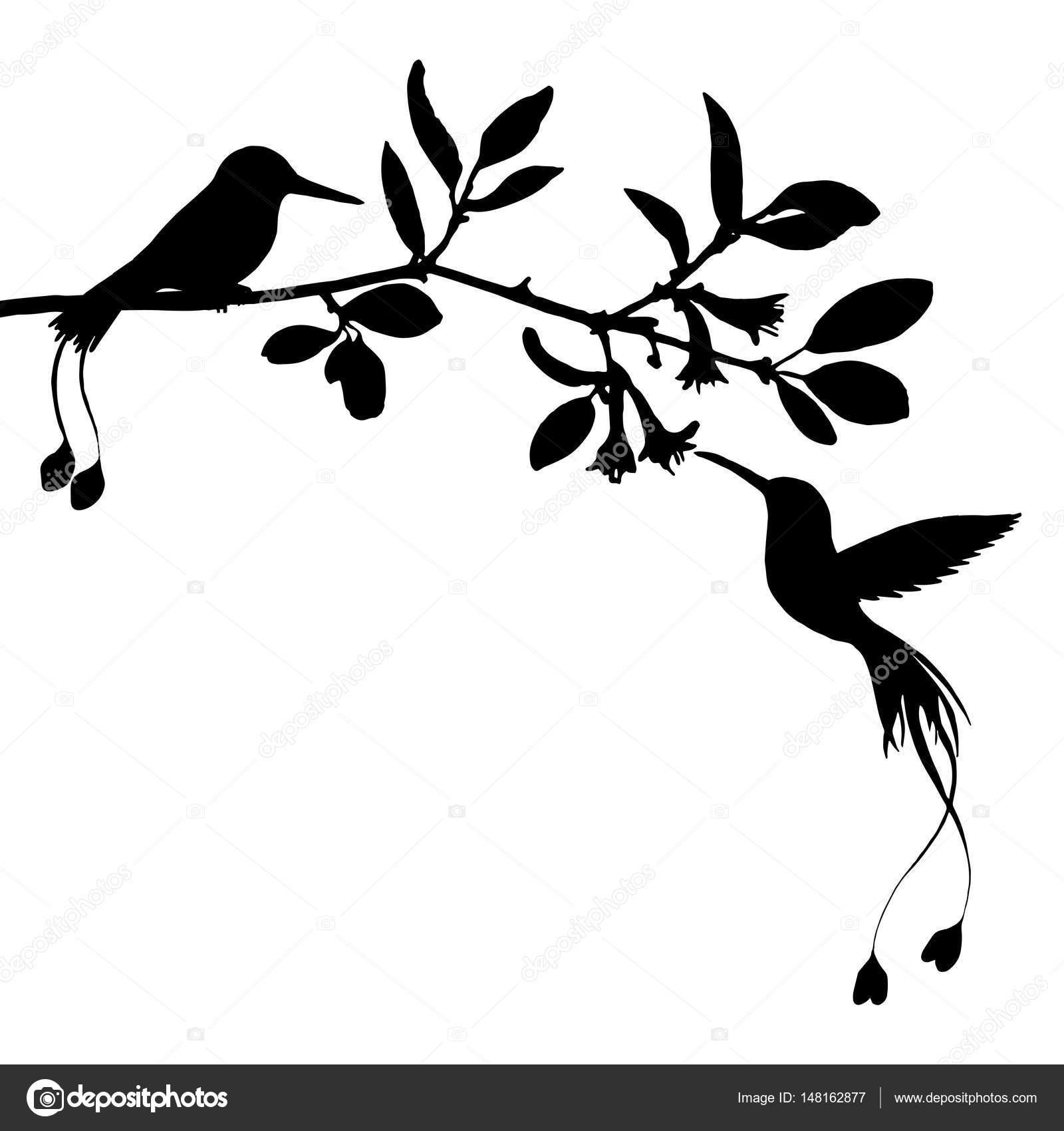Depositphotos Stock Illustration Hummingbirds And Flowers Silhouettes Hummingbird Stencil