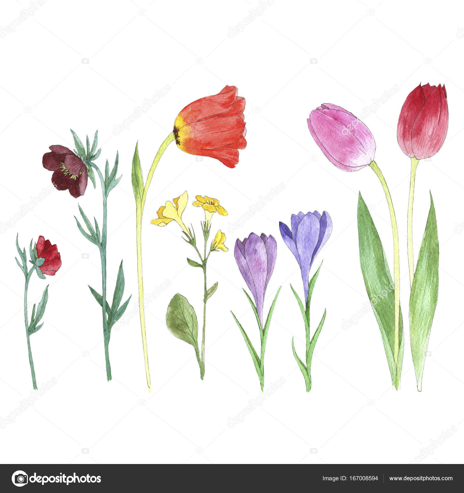 Flower Dibujo: Set De Acuarelas Dibujo Flores