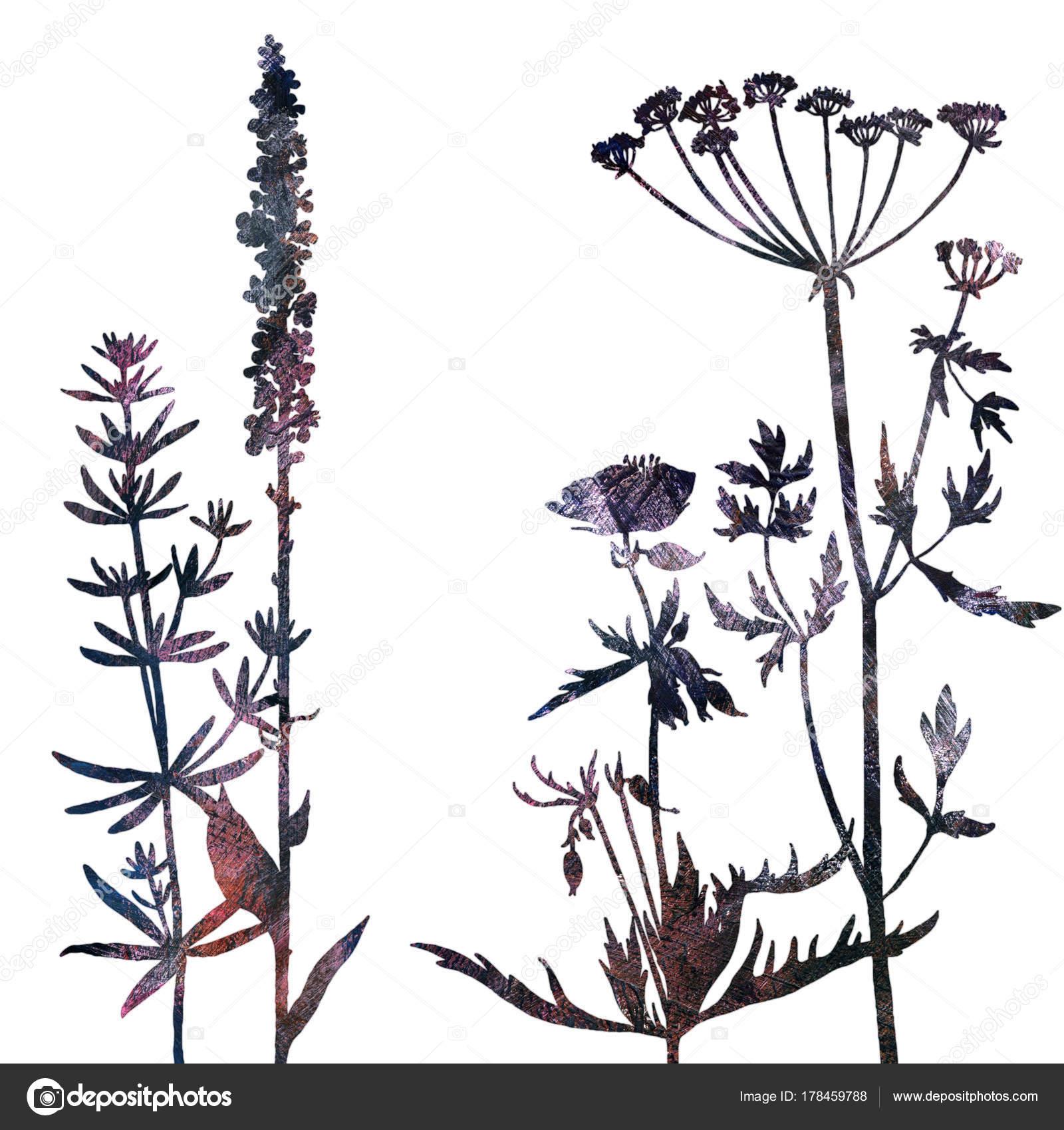 Hintergrund mit Zeichnung, Kräuter und Blumen — Stockfoto ...