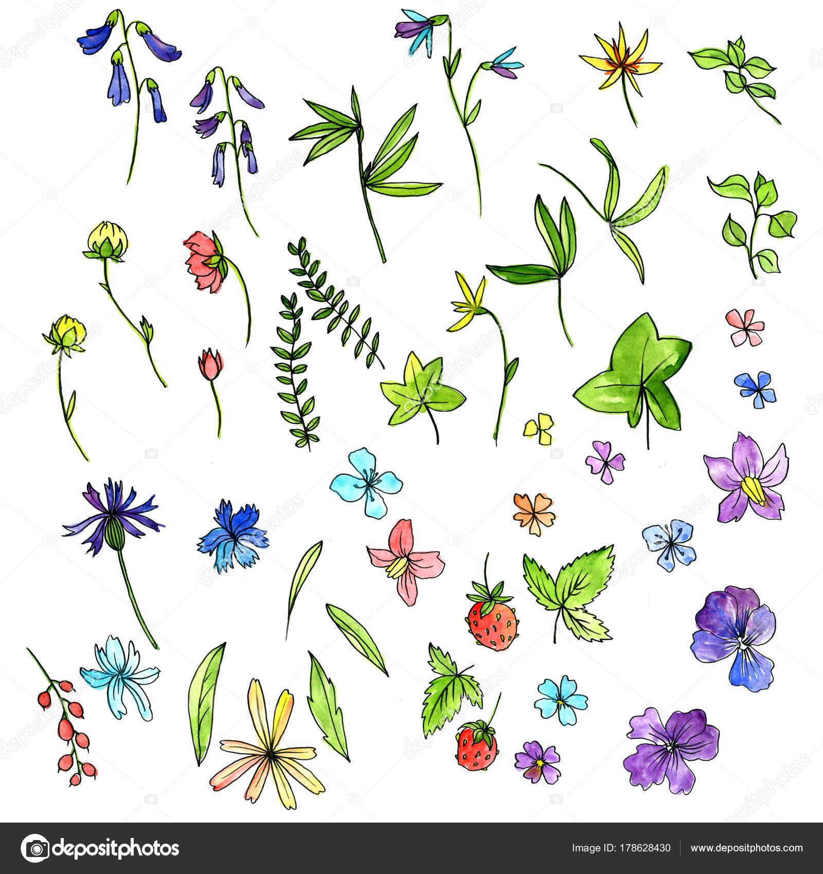 Aquarell Doodle Pflanzen und Blumen — Stockfoto © cat_arch_angel ...