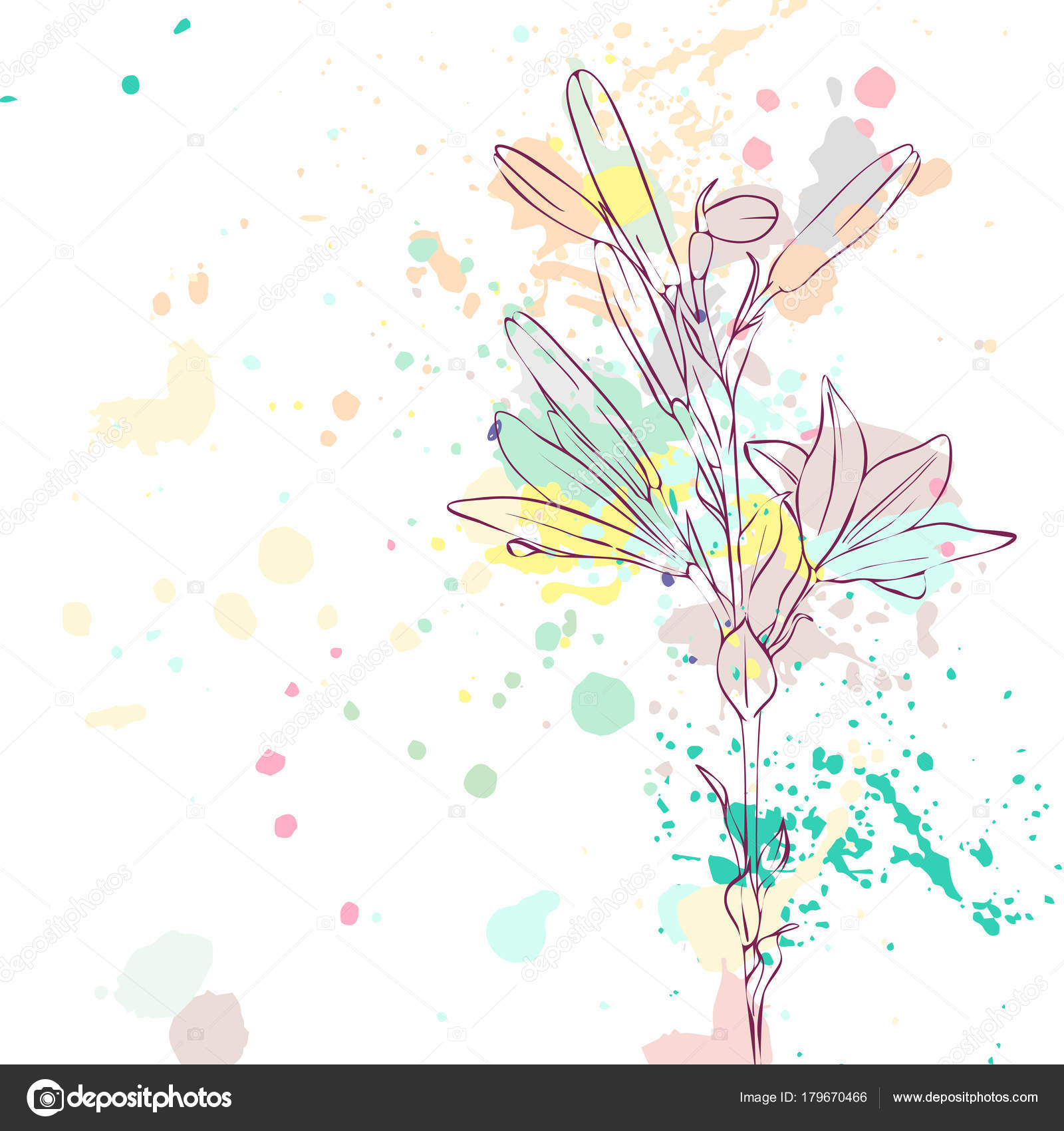 Vector Drawing Lily Flower Stock Vector Catarchangel 179670466