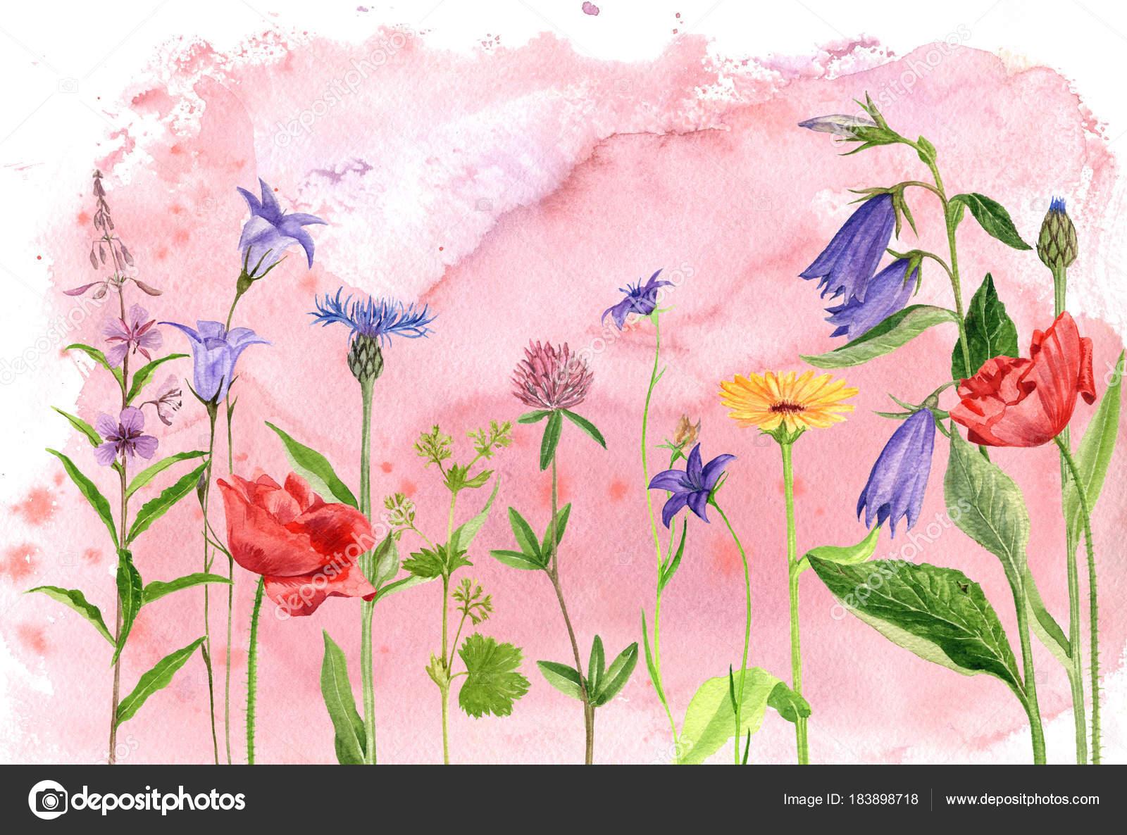 Plantes Et Fleurs Dessin Aquarelles Photographie