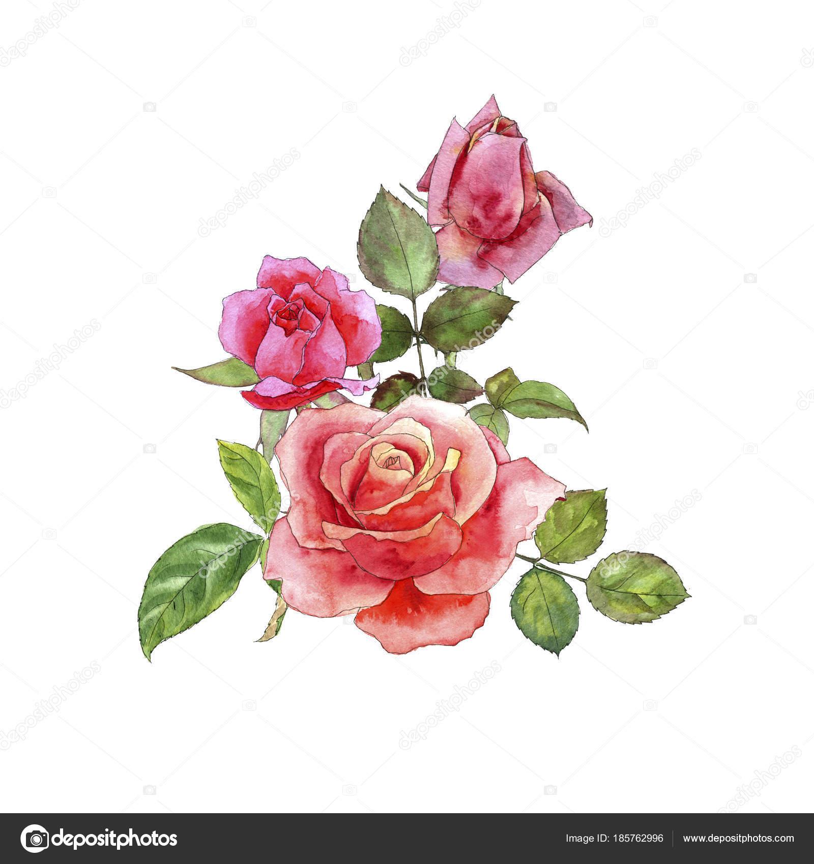 rosas dibujo acuarelas foto de stock cat arch angel 185762996