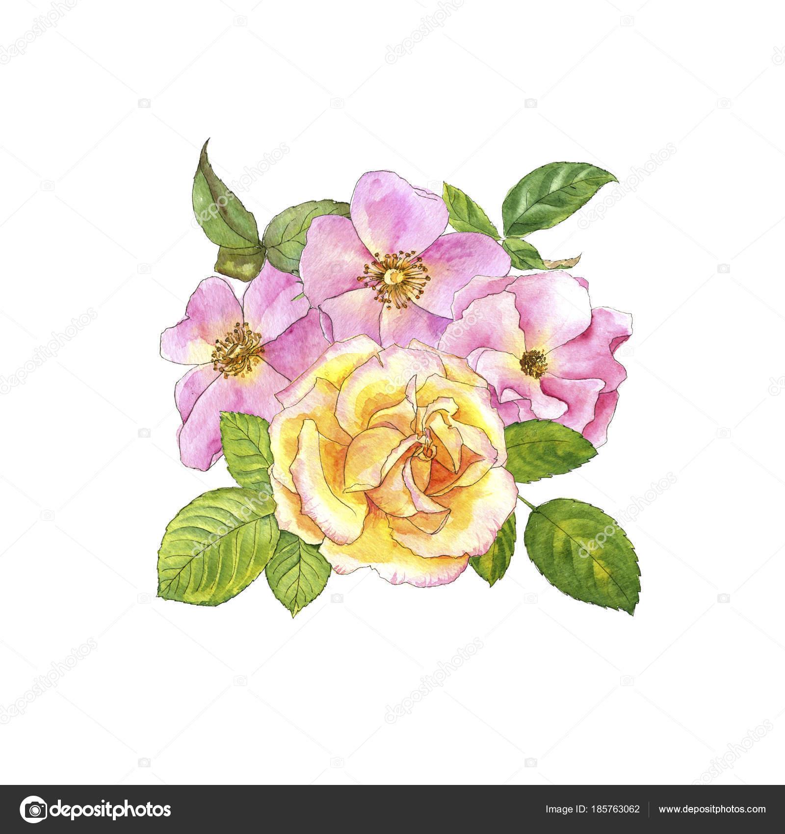 Aquarelles Dessin Roses Photographie Cat Arch Angel C 185763062