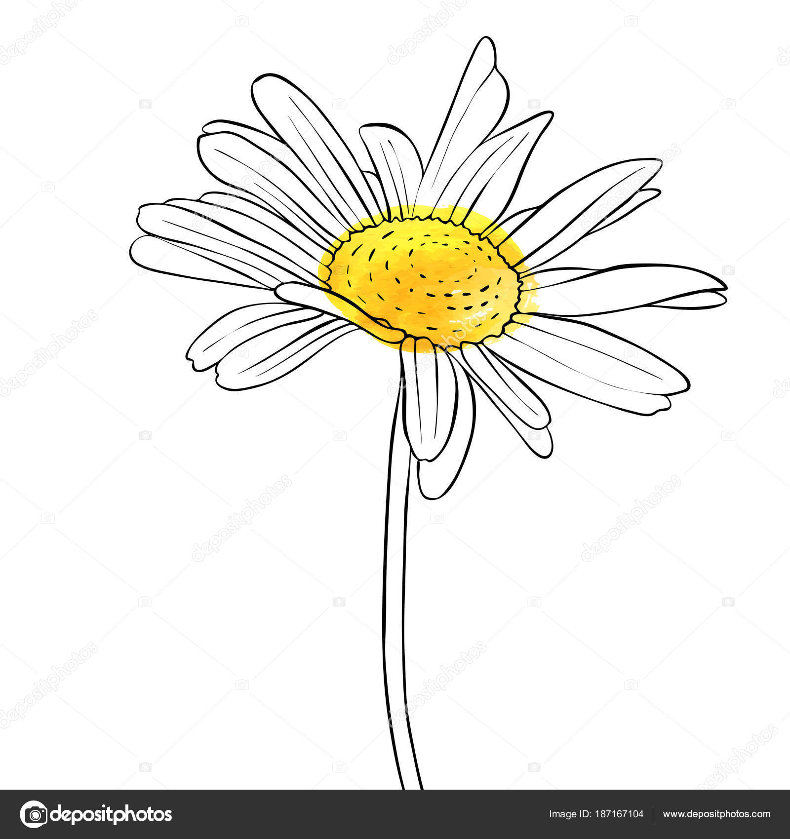 Vector Drawing Flower Of Daisy Stock Vector Catarchangel