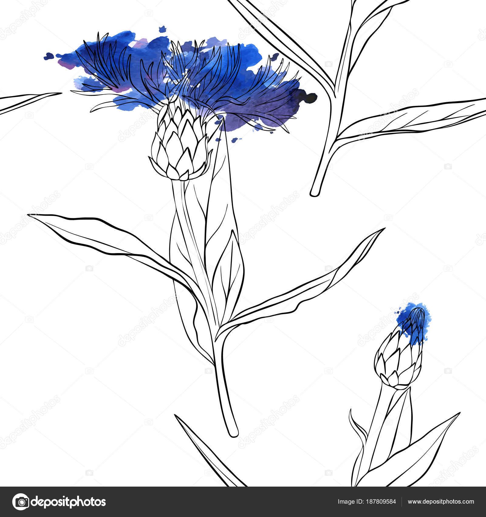 patrón transparente de vector con dibujo de flor de maíz — Vector de ...
