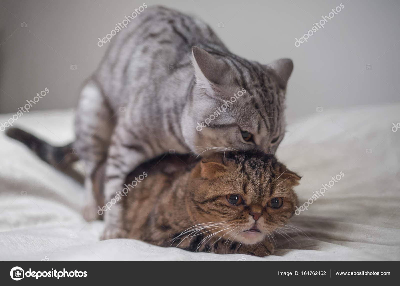 Katze Fortpflanzung