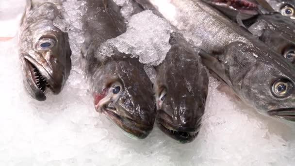 Frischer Fisch auf Eis auf dem Markt.