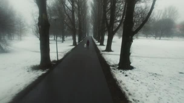Letecký snímek ženy chůze se psem v parku. Je zima, sníh a mlha