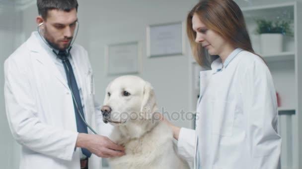 Na veterinární klinice. Vet a jeho asistent zkoumat psa s stetoskop. V pomalém pohybu