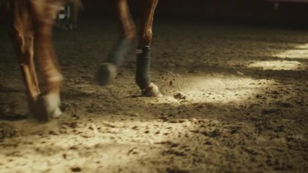 Footage of horses legs running through stable.