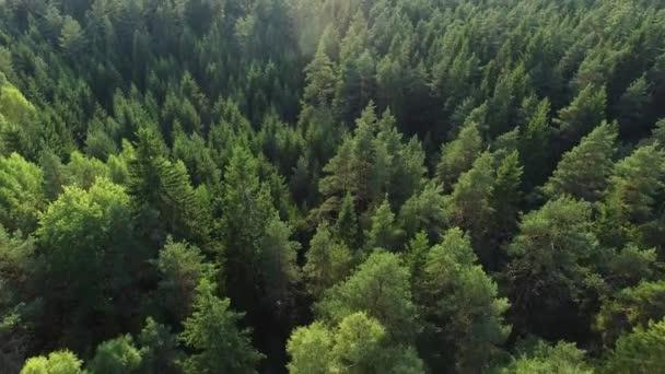 Drohne über dem nordeuropäischen Wald abgeschossen.