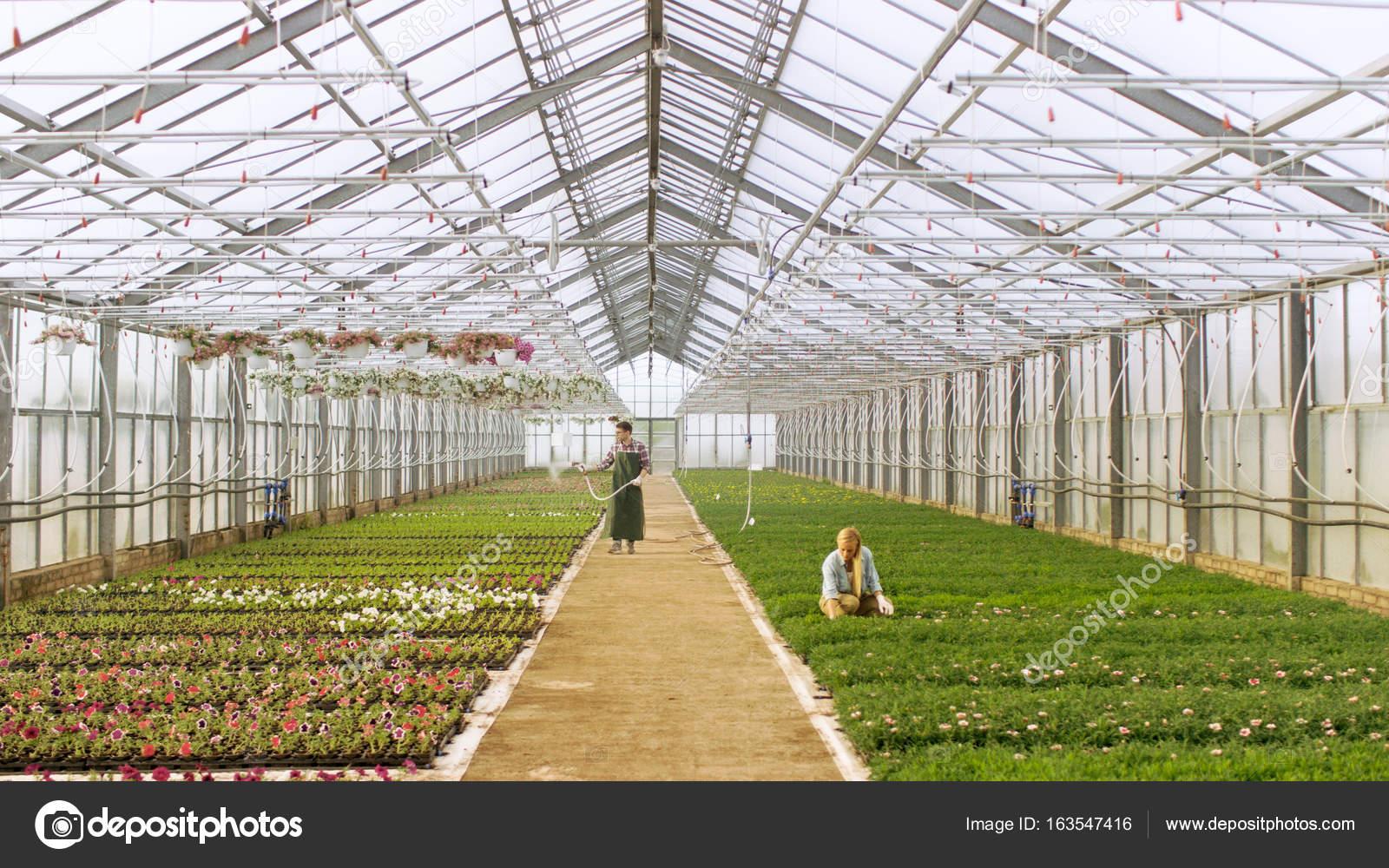 Gedreht in einem sonnigen industrielle Gewächshaus, wo Gärtner ...