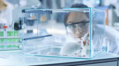 Medical Research Scientists Examines Laboratory Mice kept in a G