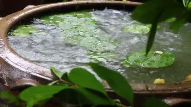 A lótusz tavacskára esős nap és az eső, hogy a hullám víz.