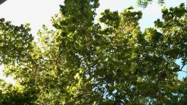 Dense foliage of trees on sun in the summer in the wild forest. Positive nature background.