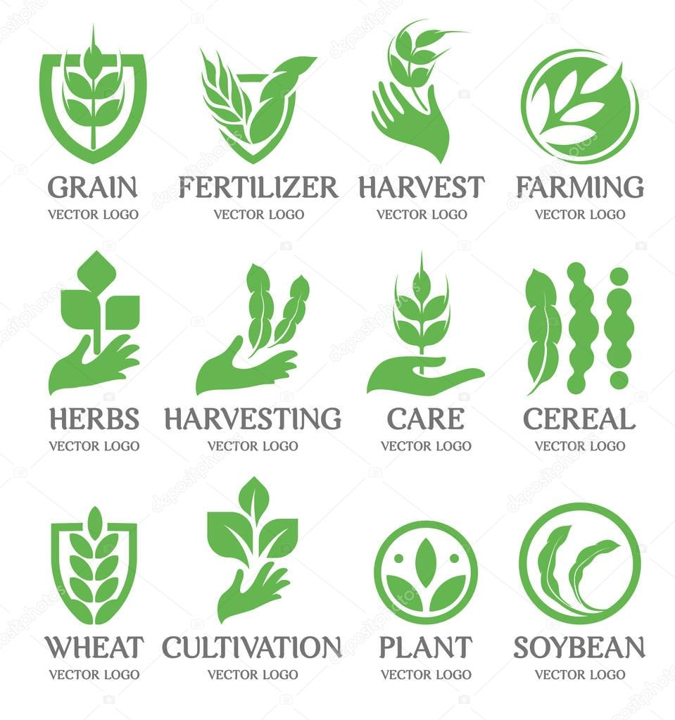 Isolated abstract green color wheat ear logo collection. Nature element logotype set. Leaf in human hand icon. Agricultural organic products signs. Harvesting vector illustration.