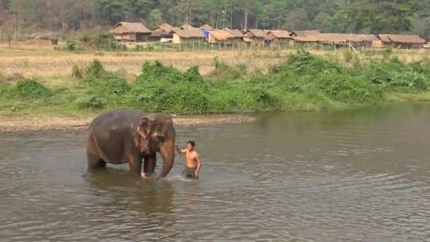 Thailand-07. April 2016: 4K Schöne Ansicht eines Mahout-Mannes, der seinen Elefanten im Fluss wäscht und badet. Asiatische Elefanten ruhen sich im Wasser des schönen tropischen Waldes in Nordthailand aus -Dan