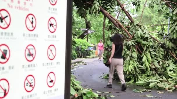 Taipei, Taiwan-13 Červenec, 2013: Lidé chodící, padlé stromy a trosky z Daan parku zničen Tajfun Soulik, Ideální pro videa o přírodních katastrofách, tajfuny, monzuny, hurikány-Dan