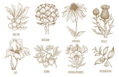 Hand-drawing collection of medicinal plants.