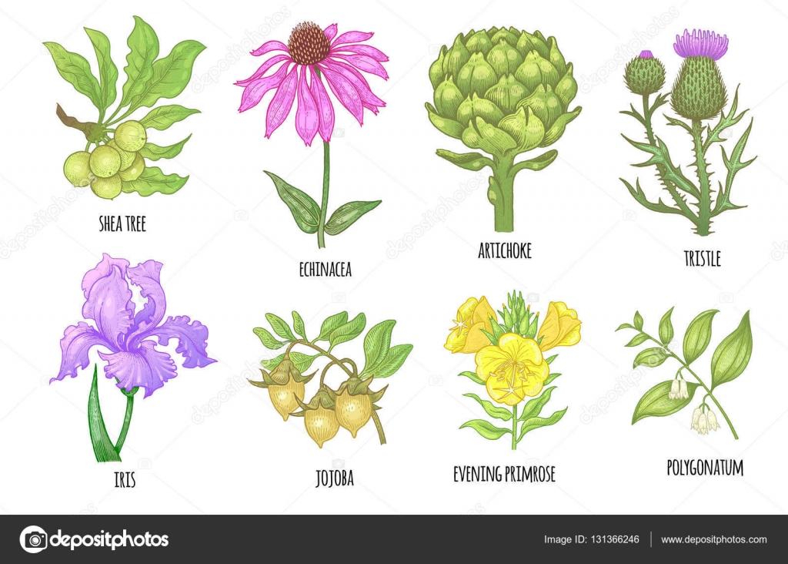 Im genes plantas medicinales conjunto de plantas for Plantas ornamentales y medicinales
