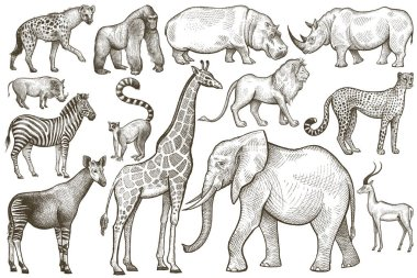 Set of African animals.