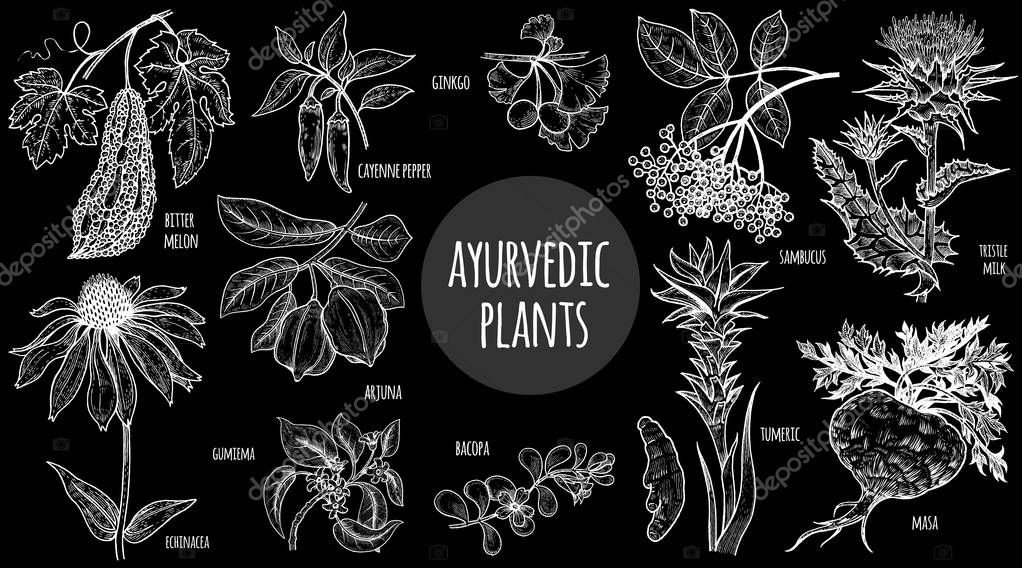 Illustration Ayurvedic herbs.