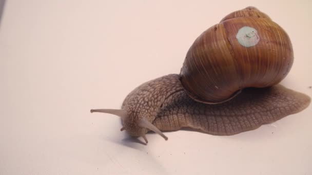 Close-up of crawling snail on white background