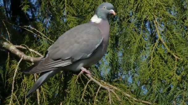 pigeon perching on a branch