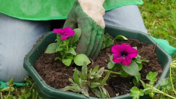 žena zalévání Petúnie květiny