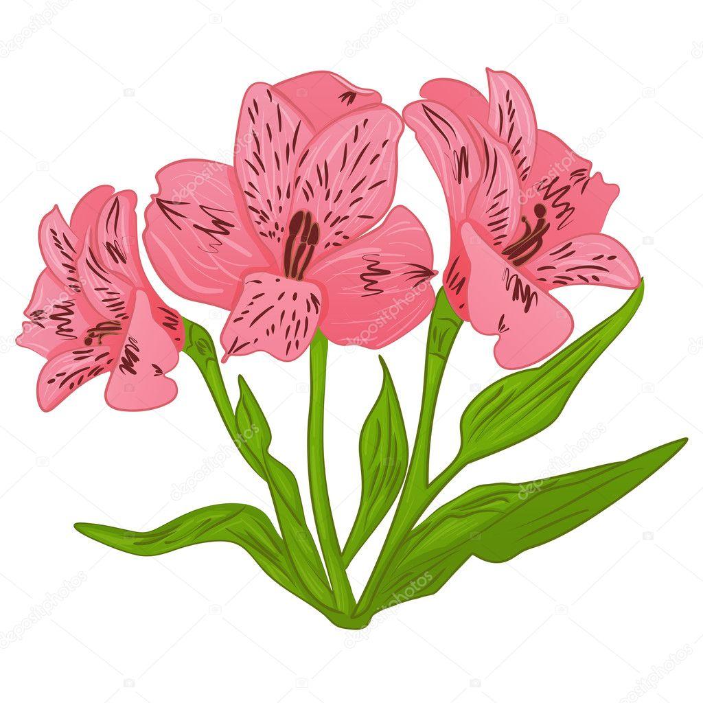 Dibujos Animados De Flores Bonitas Alstroemeria Rosa Dibujos