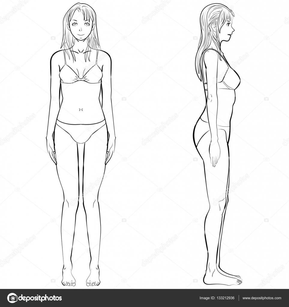 Dibujos Contorno Del Frente Humano Frente Del Cuerpo De La Mujer