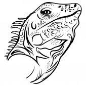Fotografie Kopf-Leguan-Profil, Skizzenvektortätowierung