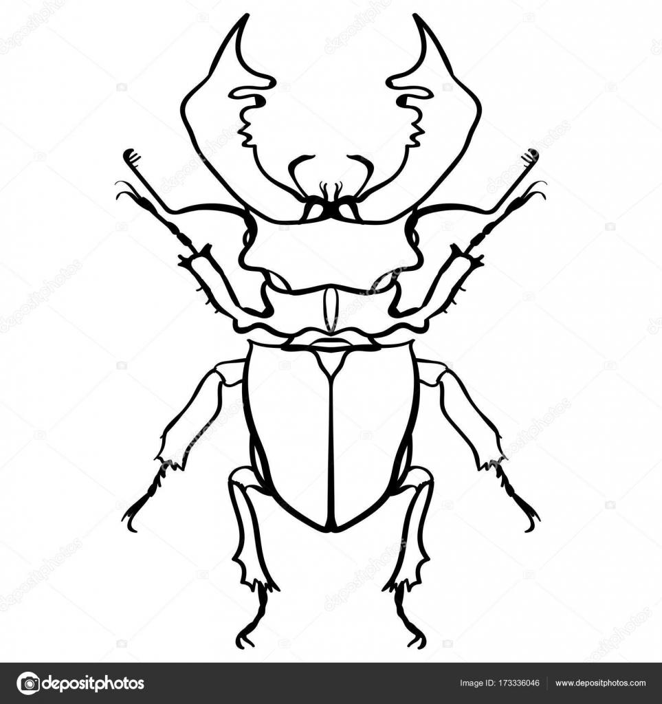 жук олень раскраска