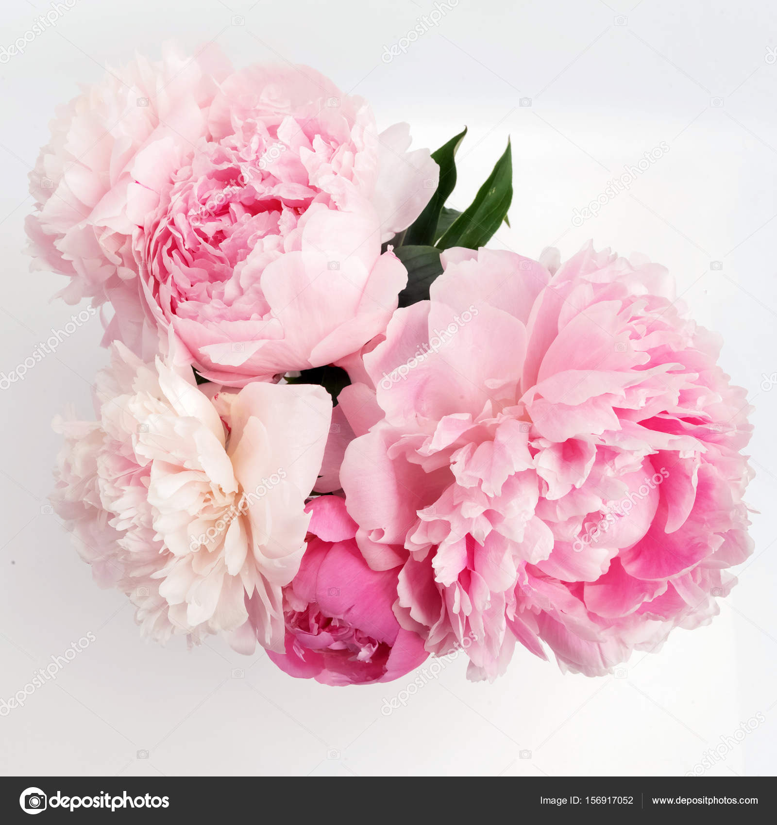 Beautiful Pink Peonie Flower On Light Background Stock Photo