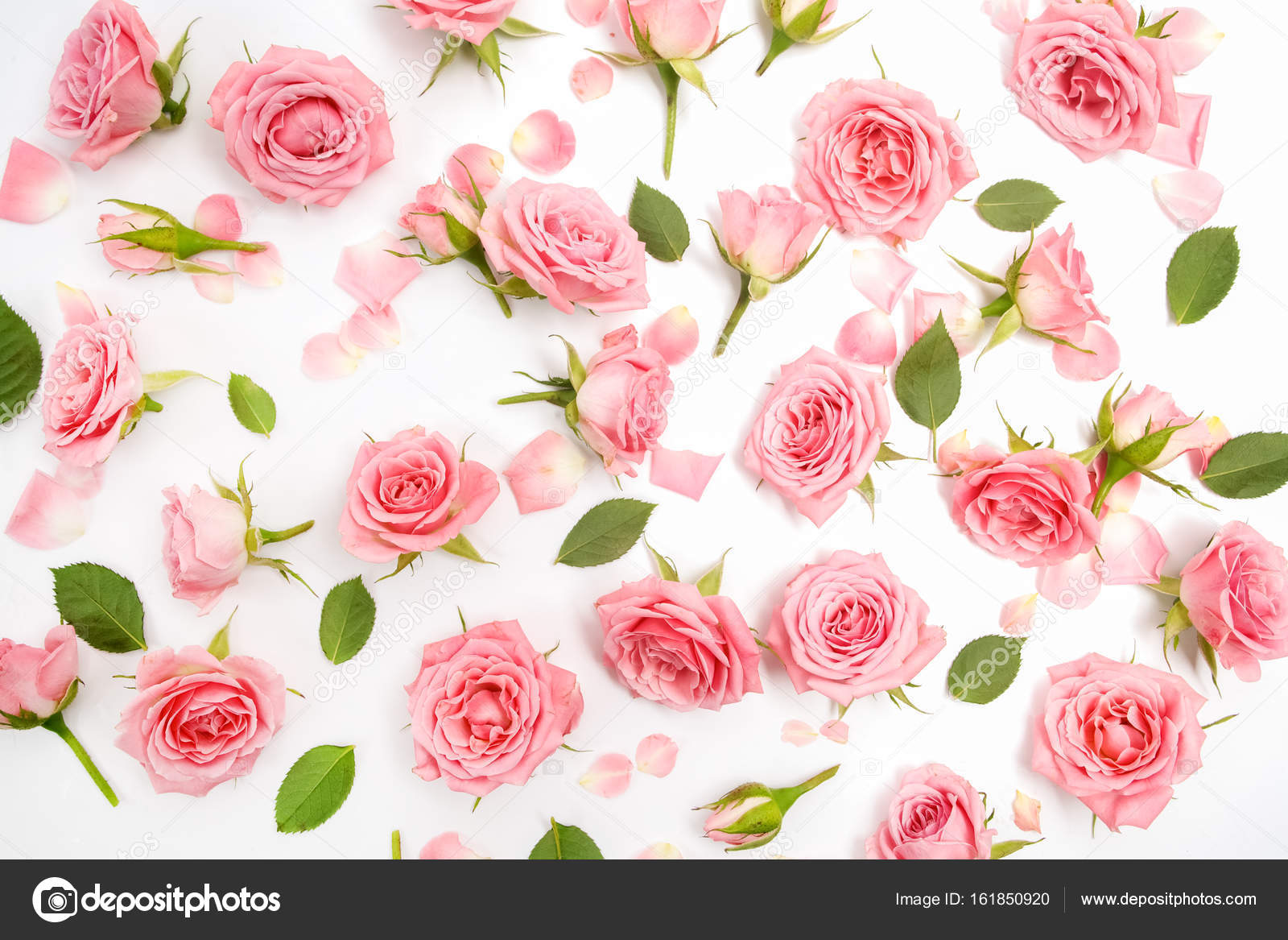 Floral Pattern Made Of Pink Roses Green Leaves Branches On White