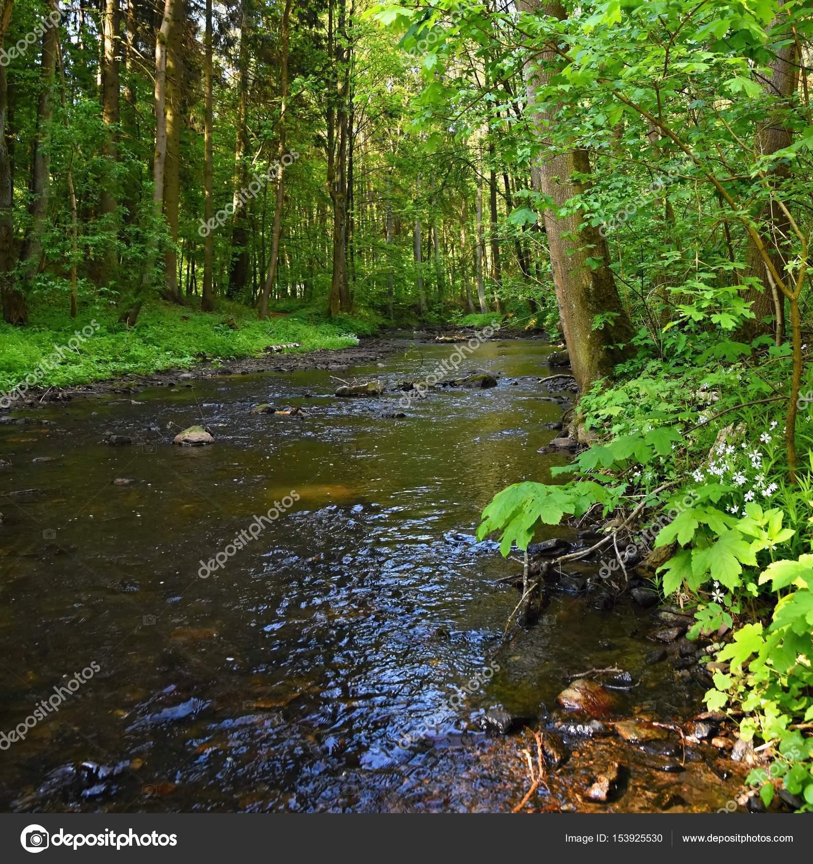 Naturaleza hermosa con un r o de piedras y bosque fondo for Naturaleza hermosa