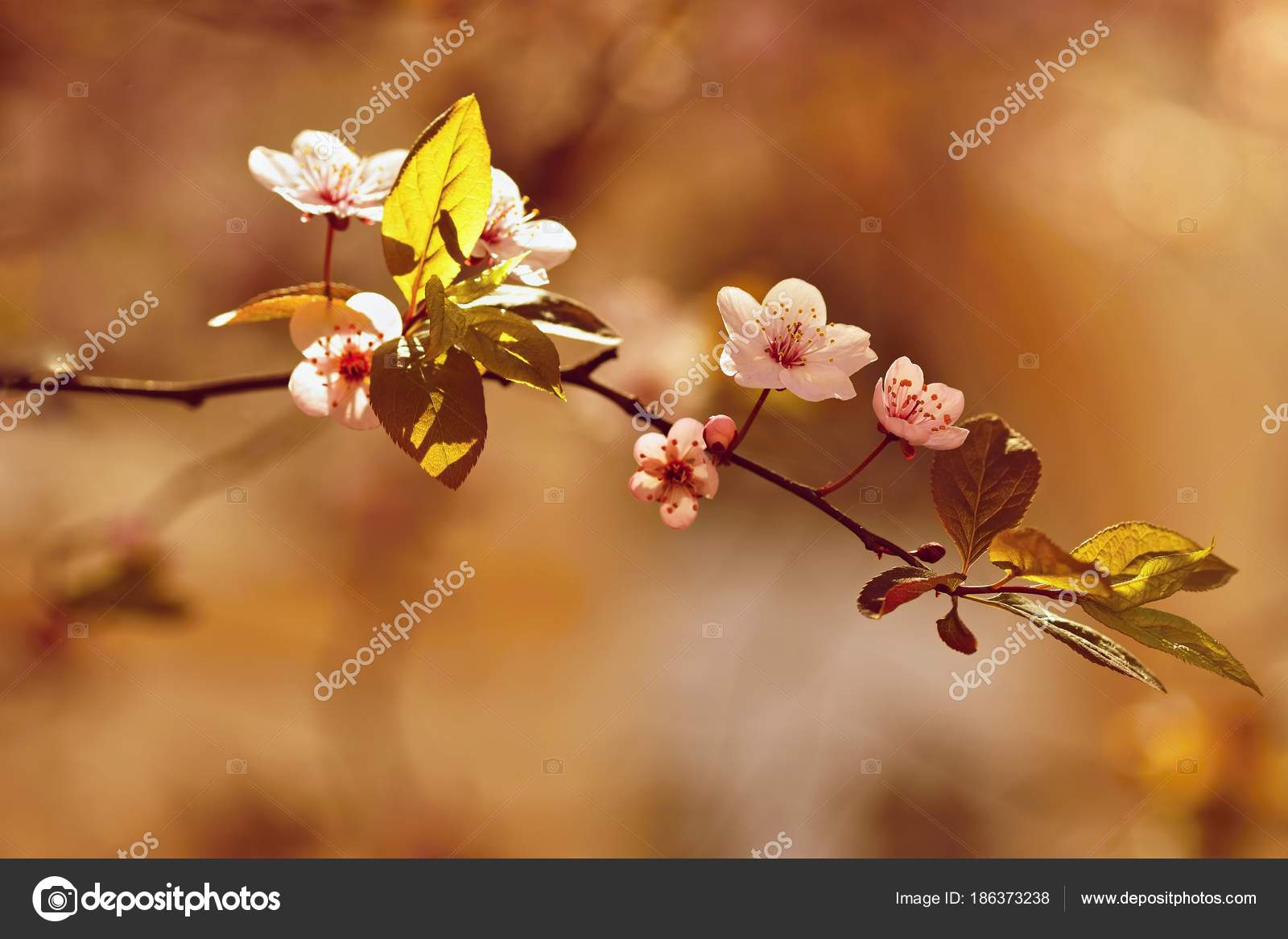 Spring Flowers Colorful Nature Seasonal Concept For Springtime