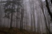 Autumn trees in forest  ,Slovakia