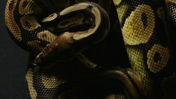 Míč pythons hadí vzor