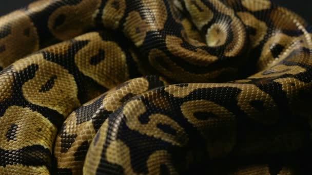 Textúra a labda Python kígyóbőr