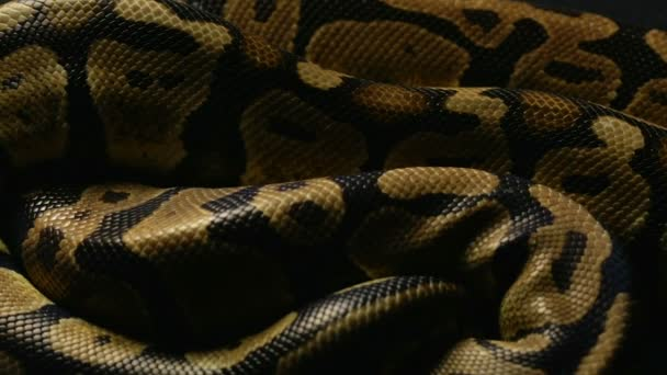 A Monty Python kígyóbőr háttér