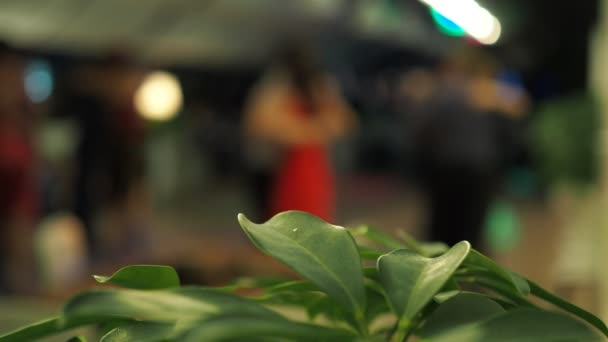Tango. Plant leaves close - up on the background of couples dancing tango in colored lights. Out of focus, bokeh.