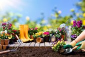 Zahradnictví - zahradník výsadba Pansy květináče a nástroje
