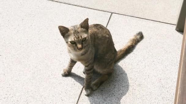 Kočka bez domova sedí na ulici a mňouká